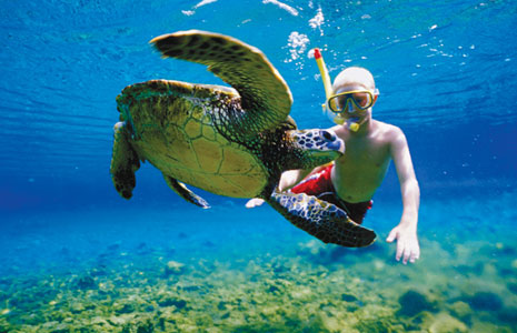 Swim with the Sea Turtles in Akumal