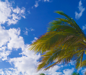 Blue Skys, a pina colada, and a palm tree! It's all I need!