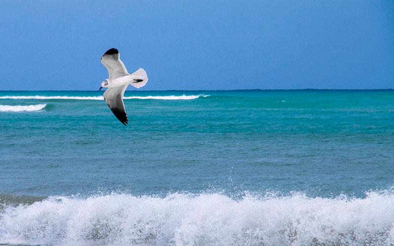 lorena ochoa playa del carmen